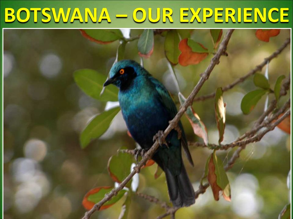 BOTSWANA – OUR EXPERIENCE 58