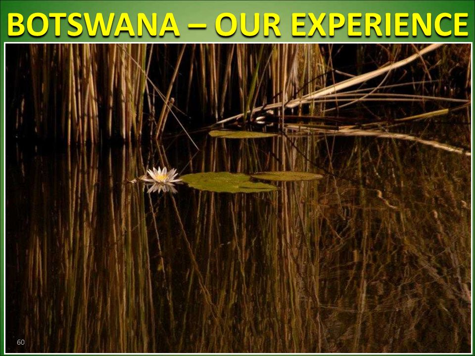 BOTSWANA – OUR EXPERIENCE 60