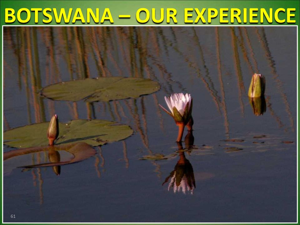 BOTSWANA – OUR EXPERIENCE 61
