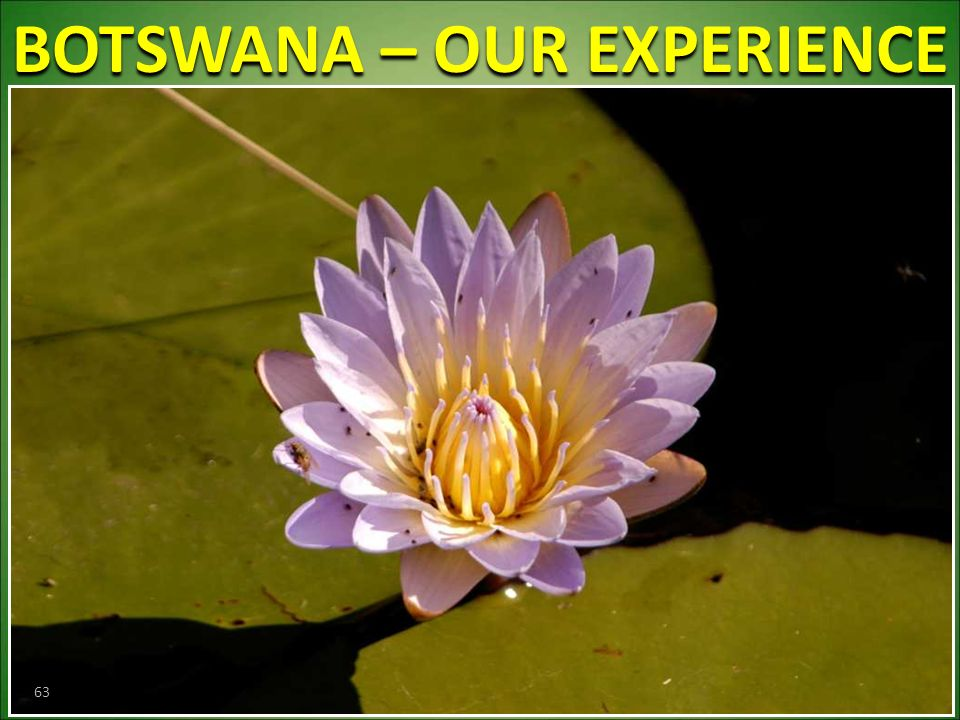 BOTSWANA – OUR EXPERIENCE 63