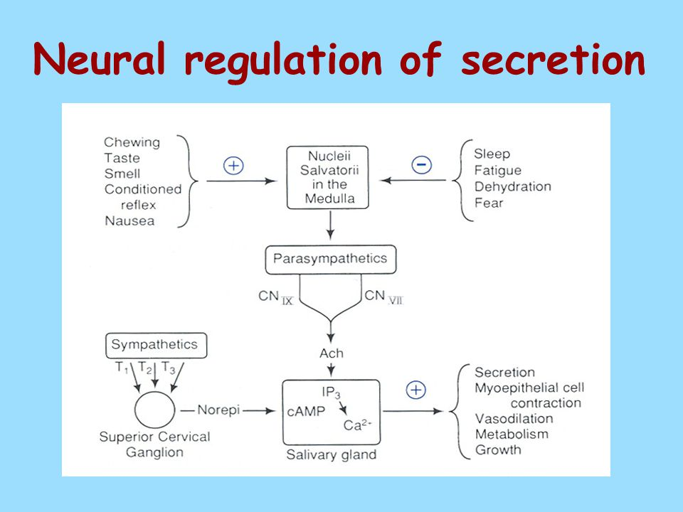 Neural regulation of secretion