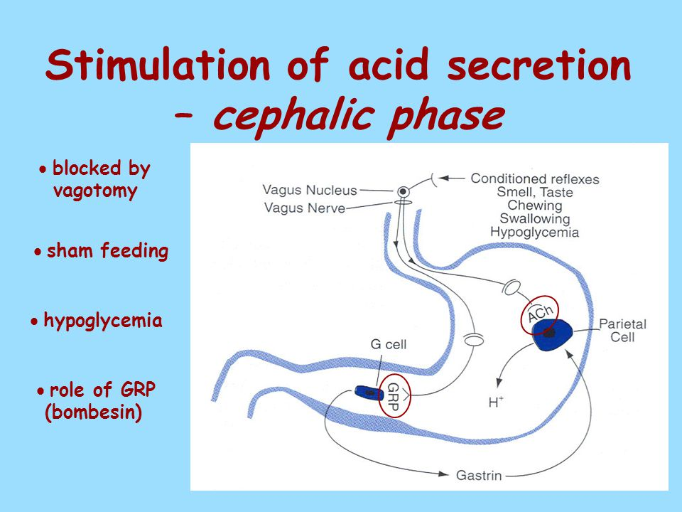 Stimulation of acid secretion – cephalic phase  blocked by vagotomy  sham feeding  hypoglycemia  role of GRP (bombesin)