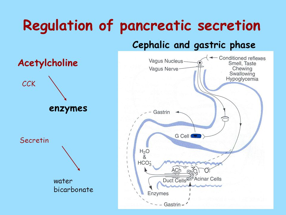 Regulation of pancreatic secretion Cephalic and gastric phase Acetylcholine CCK Secretin water bicarbonate enzymes
