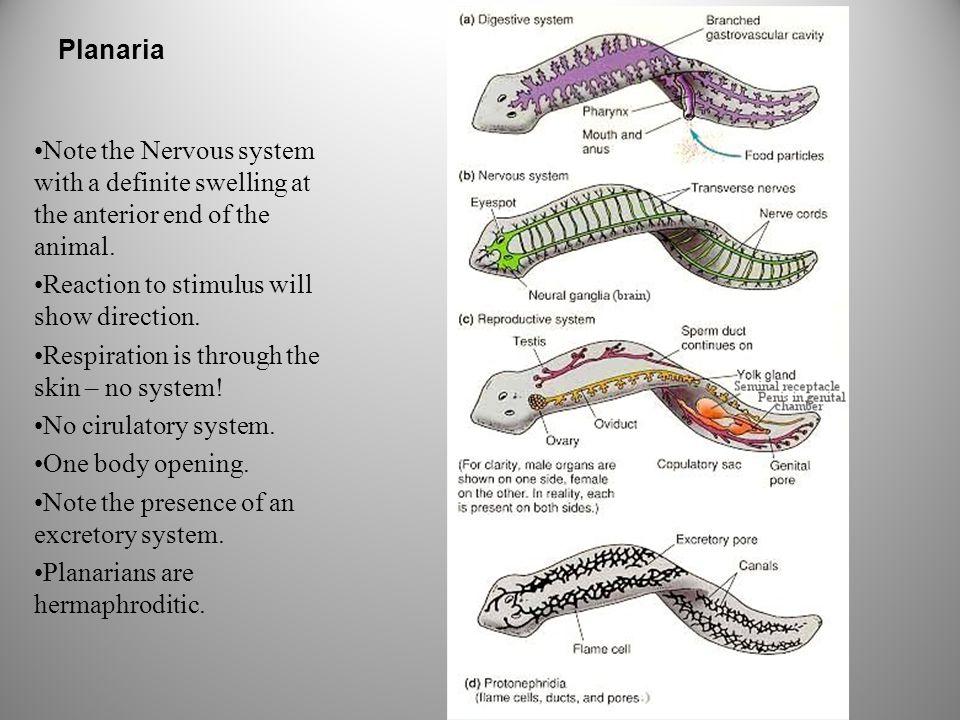 "Presentation ""Invertebrates A Survey of the various phyla ..."
