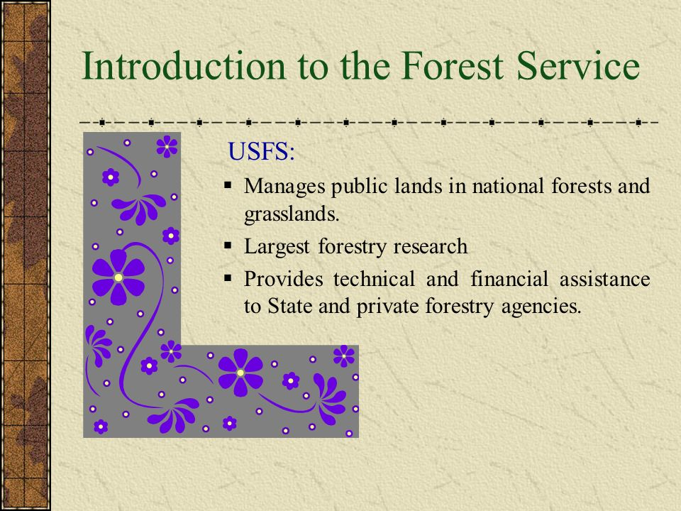Meet The U.S. Forest Service Caring for the Land and Serving People