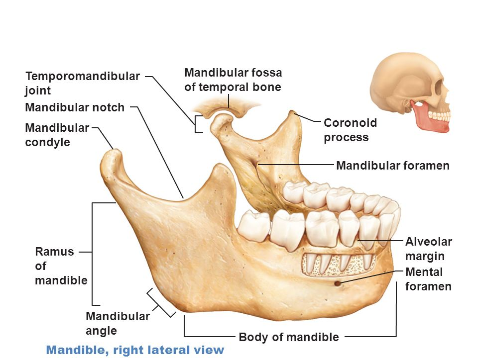 Mandibular Cast Anatomical Landmarks Robbed Keeps