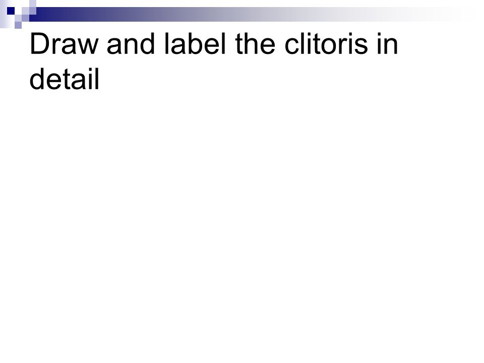 Draw and label the clitoris in detail