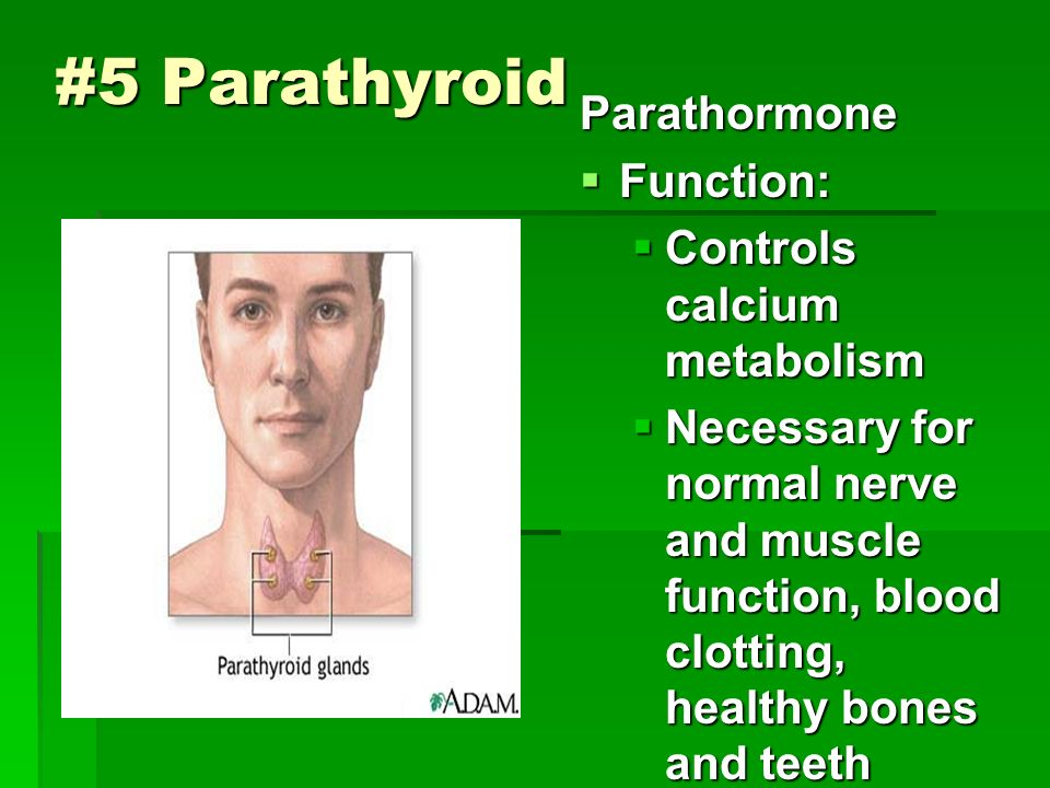 #5 Parathyroid Parathormone  Function:  Controls calcium metabolism  Necessary for normal nerve and muscle function, blood clotting, healthy bones and teeth