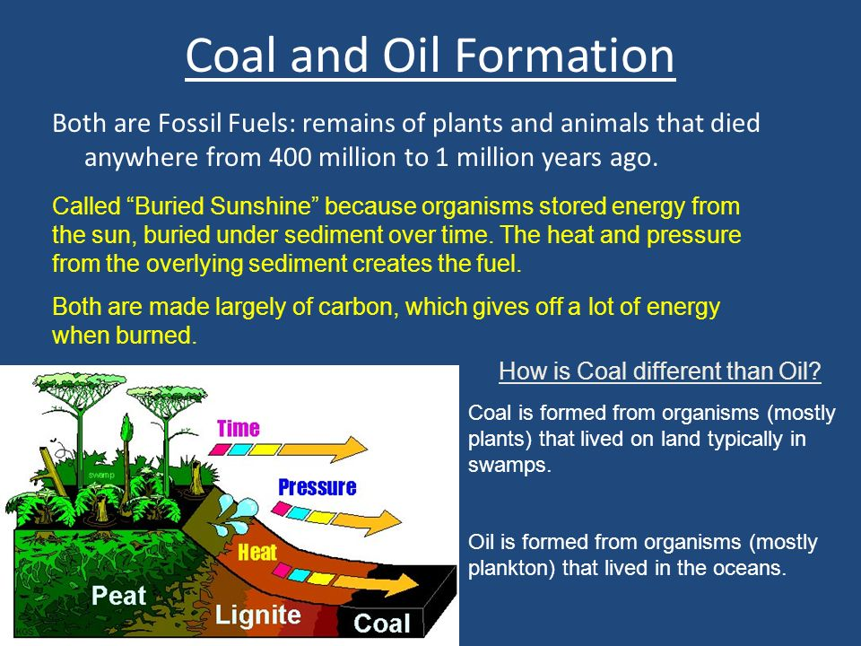 Coal and Oil Formation Both are Fossil Fuels: remains of plants and animals that died anywhere from 400 million to 1 million years ago.