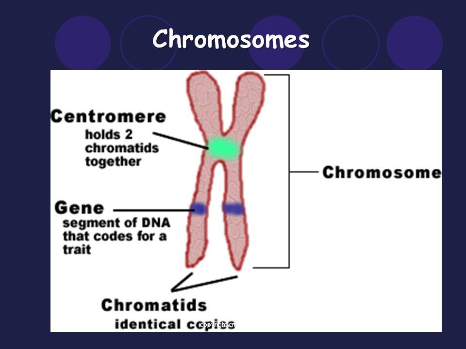 Chromosomes, Karyotypes, and Pedigrees Oh My! 14.1/14.2 1copyright cmassengale