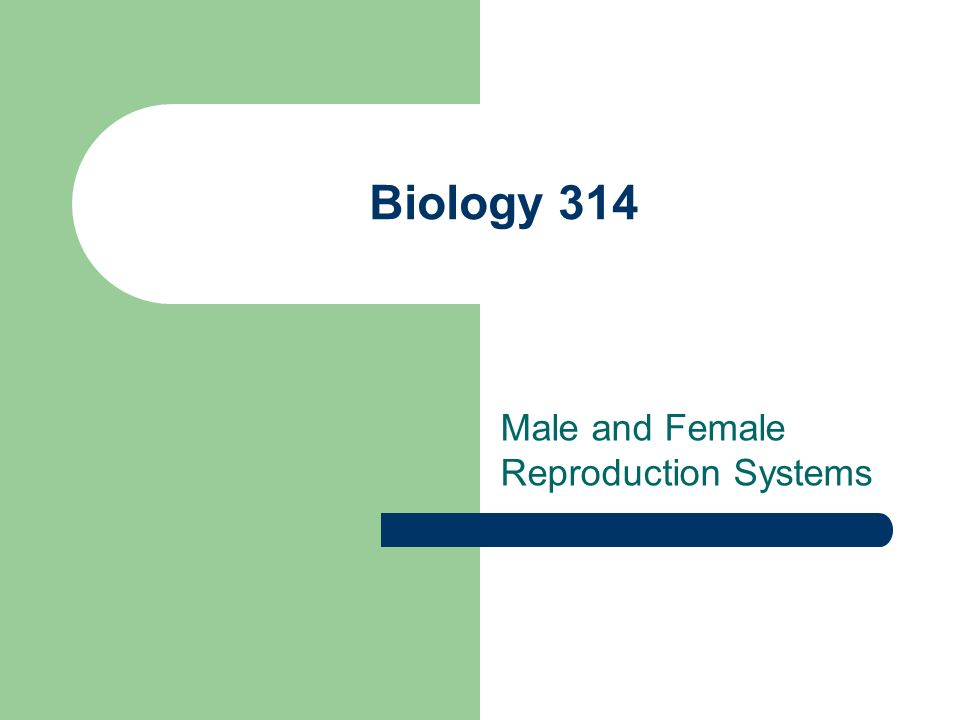Biology 314 Male and Female Reproduction Systems