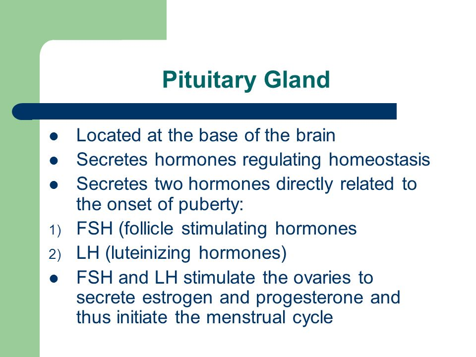 Pituitary Gland Located at the base of the brain Secretes hormones regulating homeostasis Secretes two hormones directly related to the onset of puberty: 1) FSH (follicle stimulating hormones 2) LH (luteinizing hormones) FSH and LH stimulate the ovaries to secrete estrogen and progesterone and thus initiate the menstrual cycle
