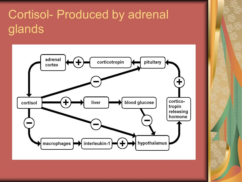 Cortisol- Produced by adrenal glands