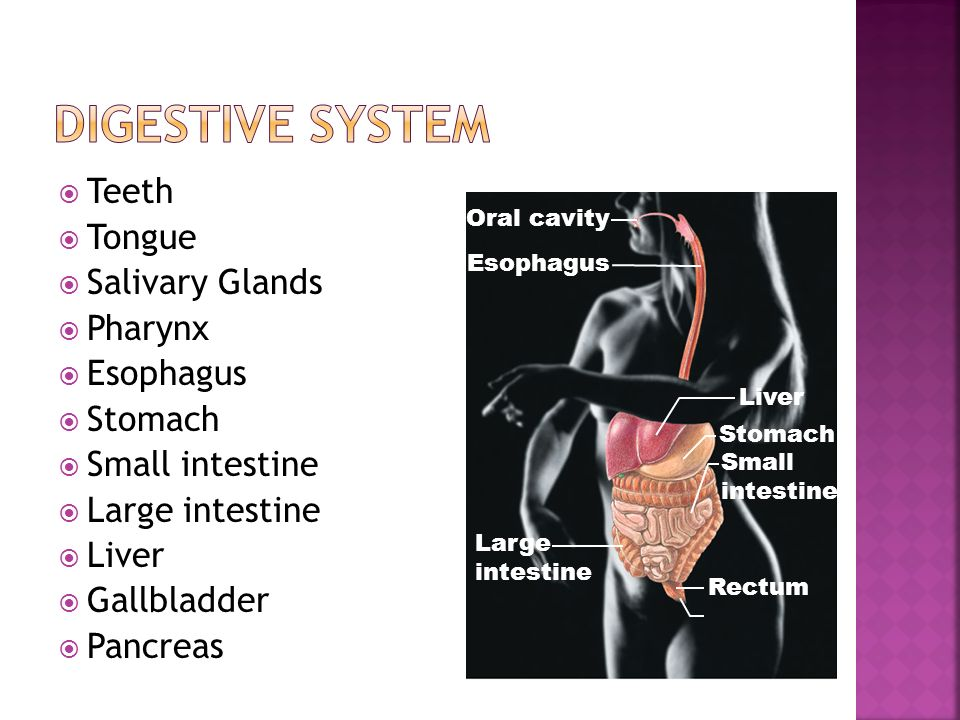  Teeth  Tongue  Salivary Glands  Pharynx  Esophagus  Stomach  Small intestine  Large intestine  Liver  Gallbladder  Pancreas Liver Oral cavity Esophagus Large intestine Stomach Small intestine Rectum