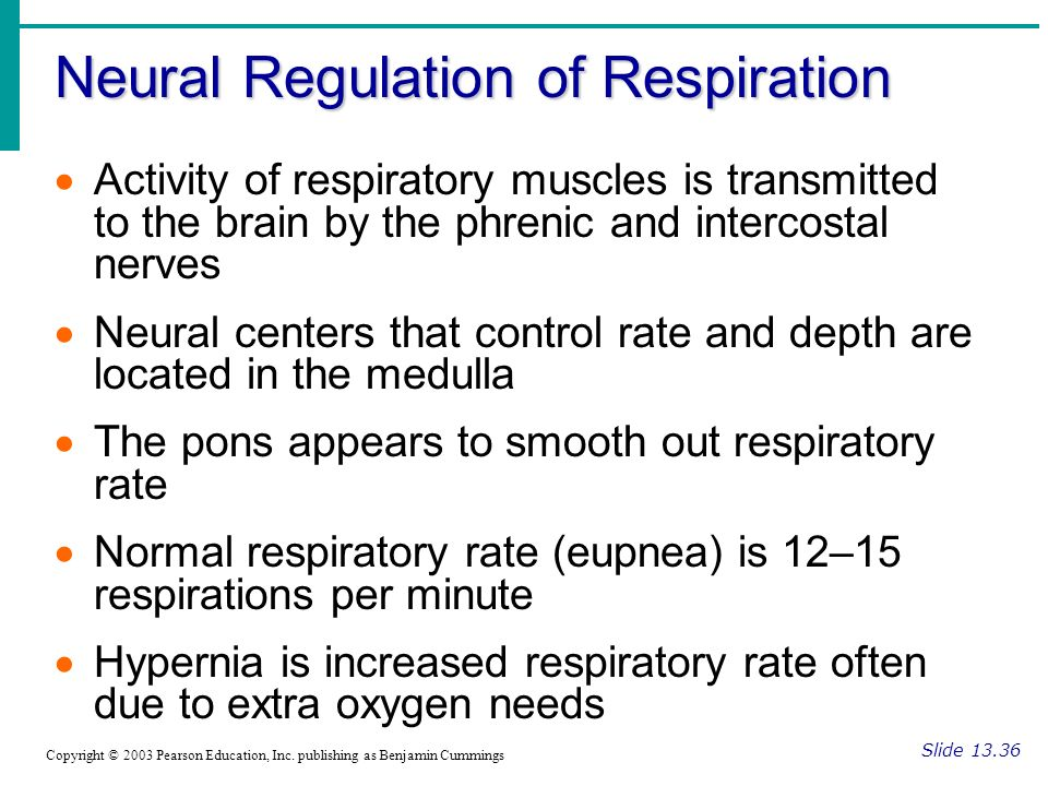 Neural Regulation of Respiration Slide Copyright © 2003 Pearson Education, Inc.
