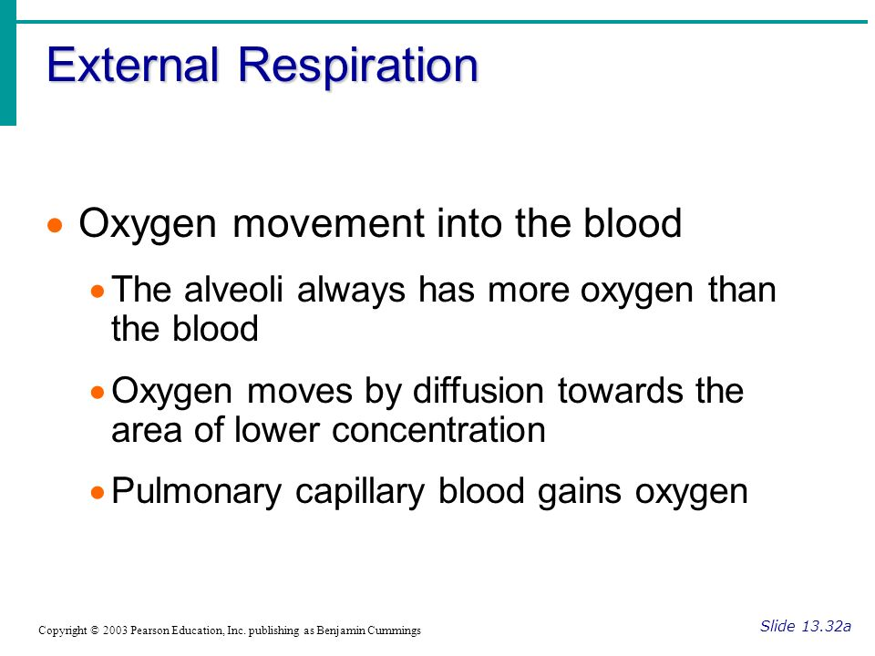 External Respiration Slide 13.32a Copyright © 2003 Pearson Education, Inc.