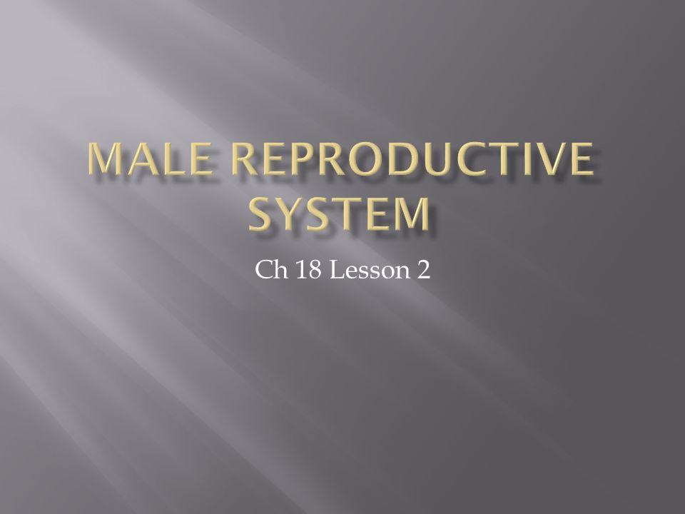 Ch 18 Lesson 2