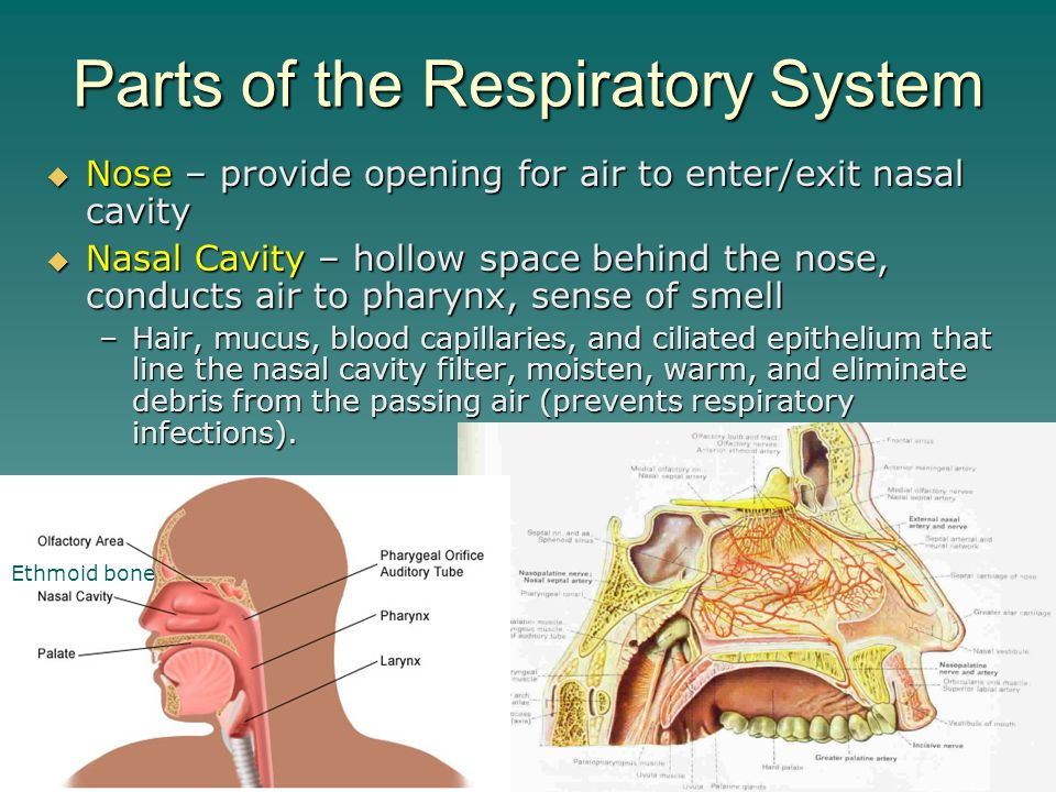 Respiratory physiology and exercise Essay Writing Service ...