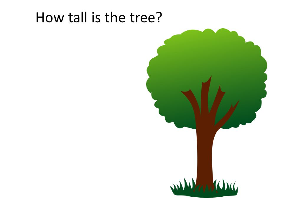 How tall is the tree