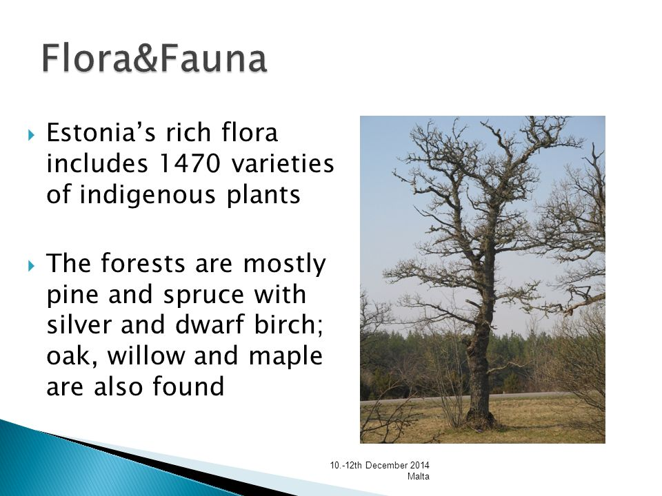  Estonia's rich flora includes 1470 varieties of indigenous plants  The forests are mostly pine and spruce with silver and dwarf birch; oak, willow and maple are also found th December 2014 Malta