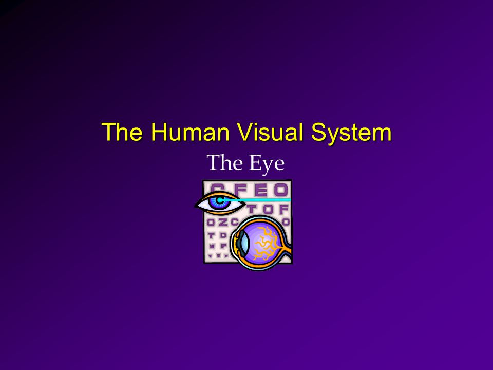 The Human Visual System The Eye