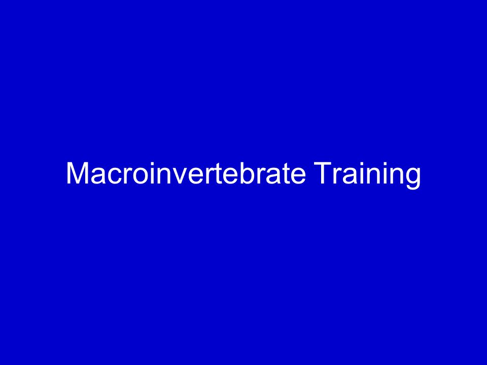 Macroinvertebrate Training