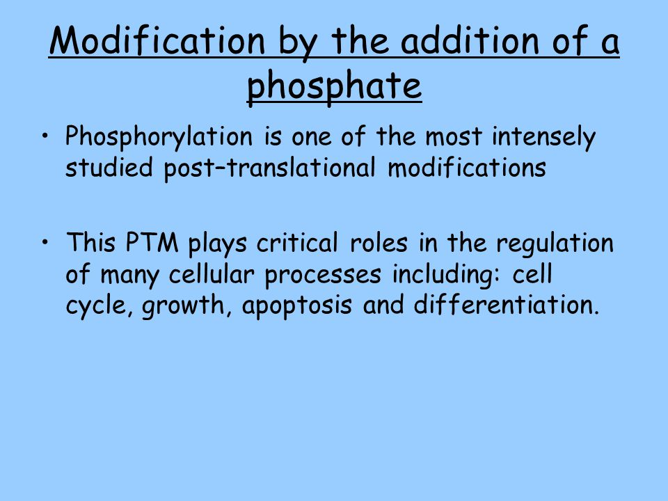 Modification by the addition of a phosphate Phosphorylation is one of the most intensely studied post–translational modifications This PTM plays critical roles in the regulation of many cellular processes including: cell cycle, growth, apoptosis and differentiation.