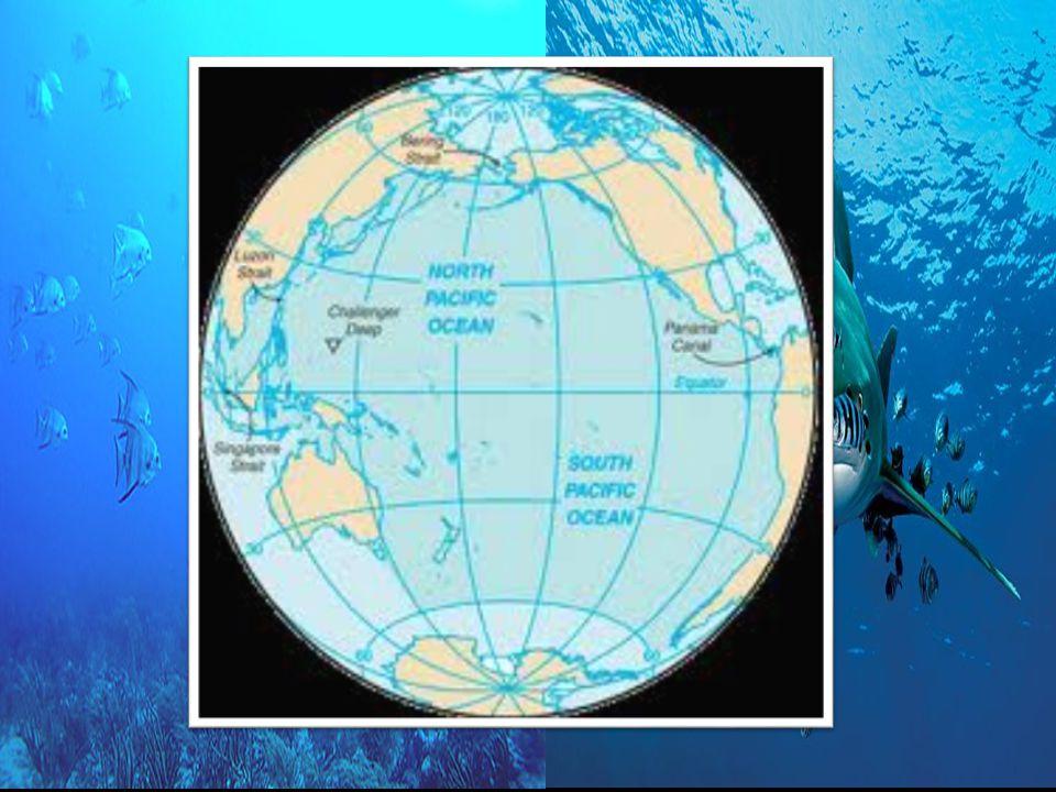 OPEN OCEAN BIOME Earth surface is 70% ocean water.