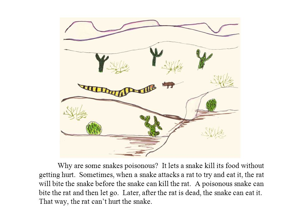 Why are some snakes poisonous. It lets a snake kill its food without getting hurt.