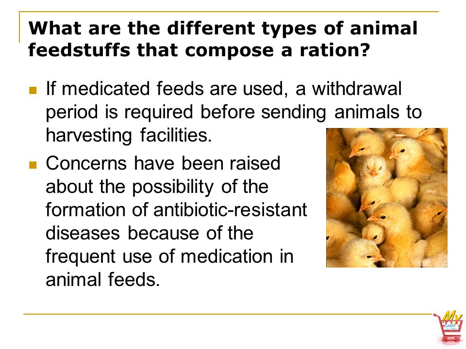 What are the different types of animal feedstuffs that compose a ration.