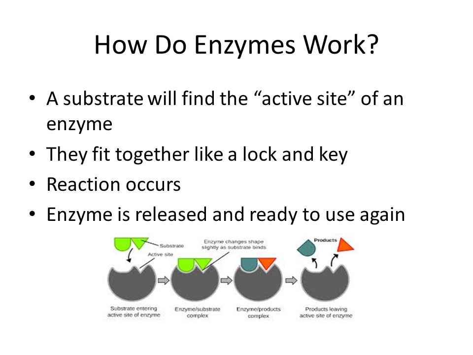How Do Enzymes Work.