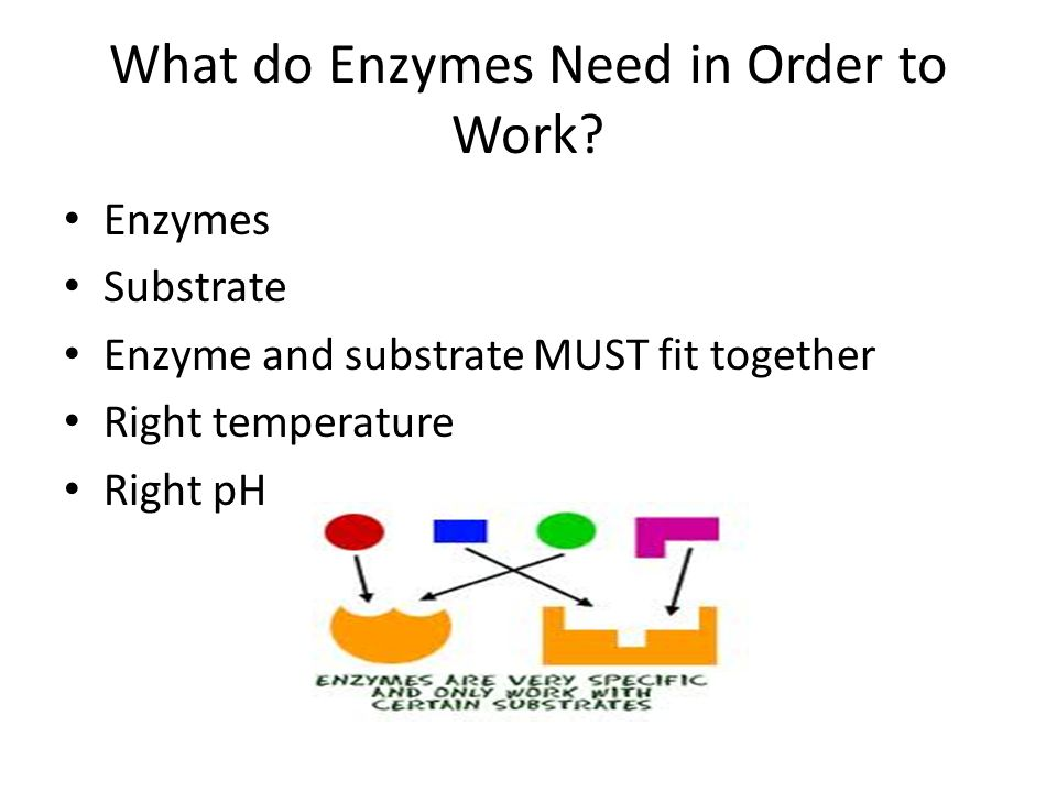 What do Enzymes Need in Order to Work.