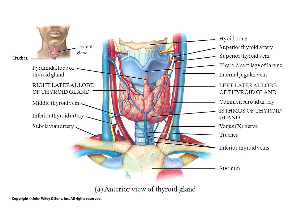 Ungewöhnlich Grau Anatomie Online Ansehen Zeitgenössisch - Anatomie ...