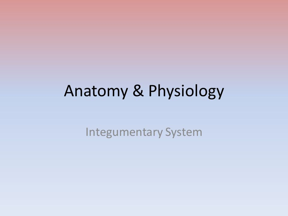 Anatomy & Physiology Integumentary System