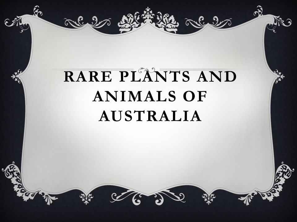 australia boast of many endemic plants and animals Animals of australia australian plants and animals according to the australian department of the environment's endangered australian animals list many.