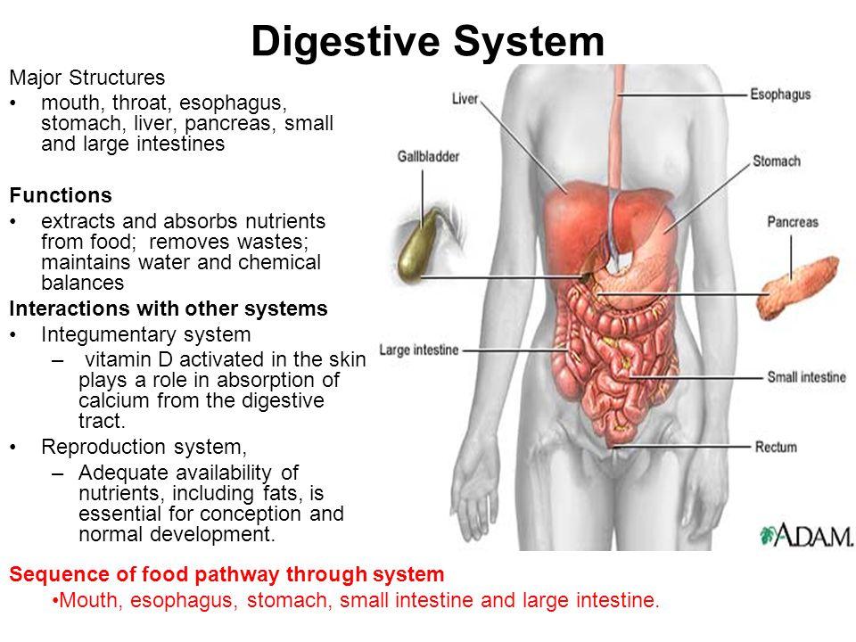 Human Body Systems Human Body Organization The Human Body Is