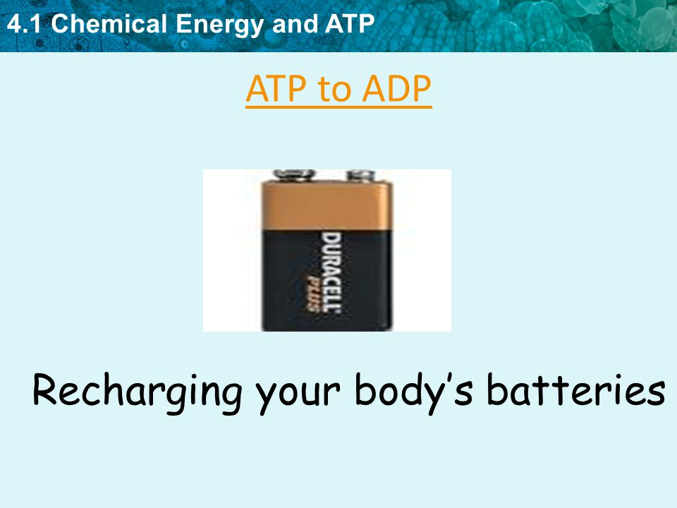 4.1 Chemical Energy and ATP KEY CONCEPT All cells need chemical ...