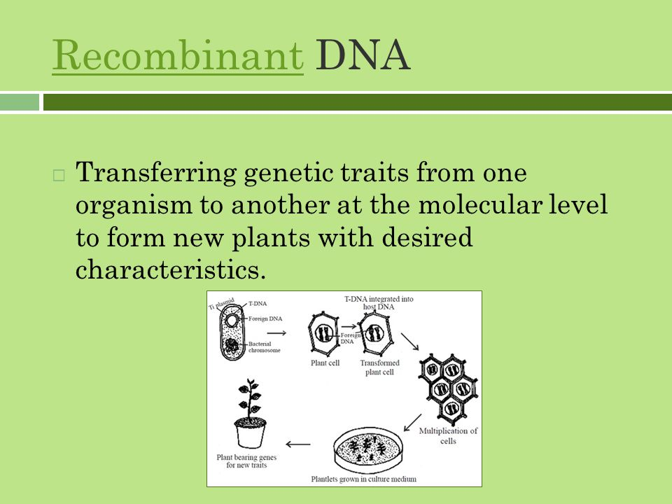 RecombinantRecombinant DNA  Transferring genetic traits from one organism to another at the molecular level to form new plants with desired characteristics.