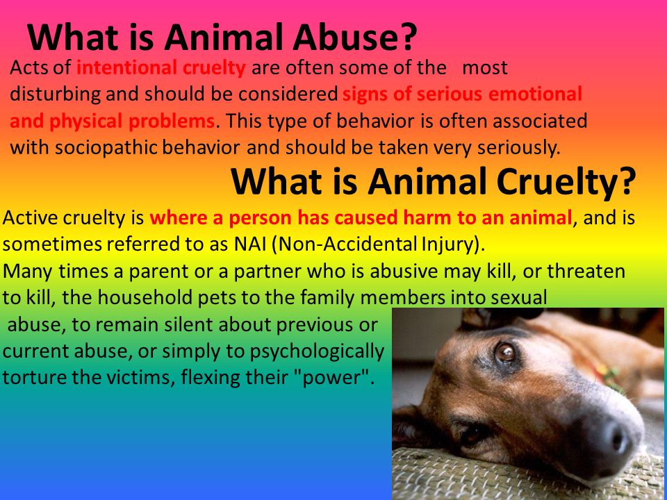 animal abuse persuasive Children who live in homes where animal abuse is present are often more about essay on informative speech outline: animal cruelty animal testing persuasive.