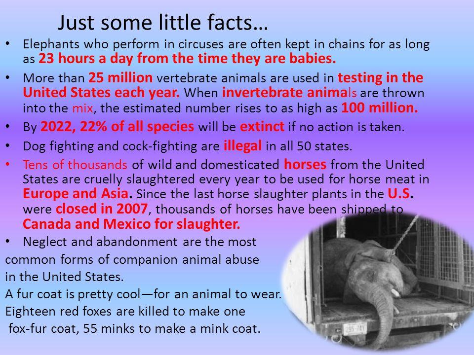 Animal cruelty thesis statement