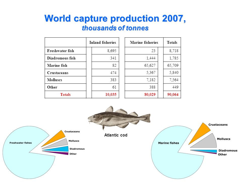19 World capture production 2007, thousands of tonnes Inland fisheries Freshwater fish8,695 Diadromous fish341 Marine fish82 Crustaceans474 Molluscs383 Other61 Totals10,035 Marine fisheriesTotals 238,718 1,4441,785 65,62765,709 5,3675,840 7,1827, ,02990,064 Atlantic cod