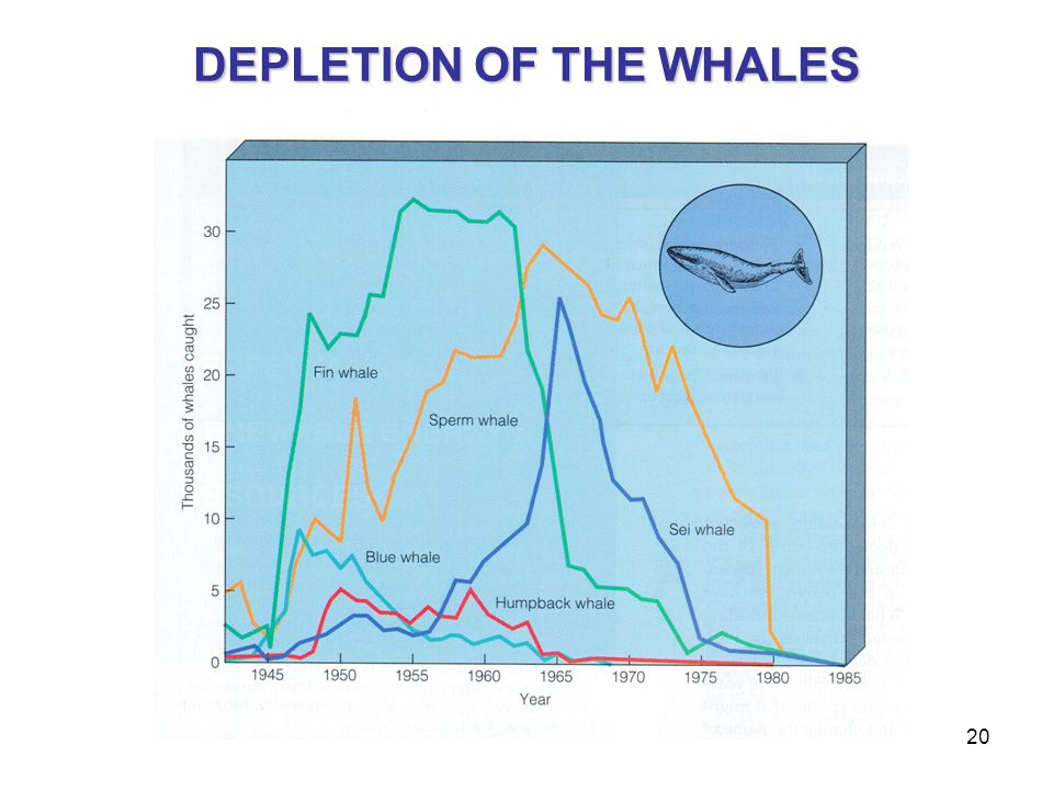 20 DEPLETION OF THE WHALES