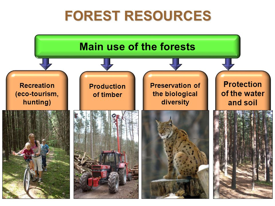 51 Main use of the forests Production of timber Recreation (eco-tourism, hunting) Protection of the water and soil Preservation of the biological diversity FOREST RESOURCES