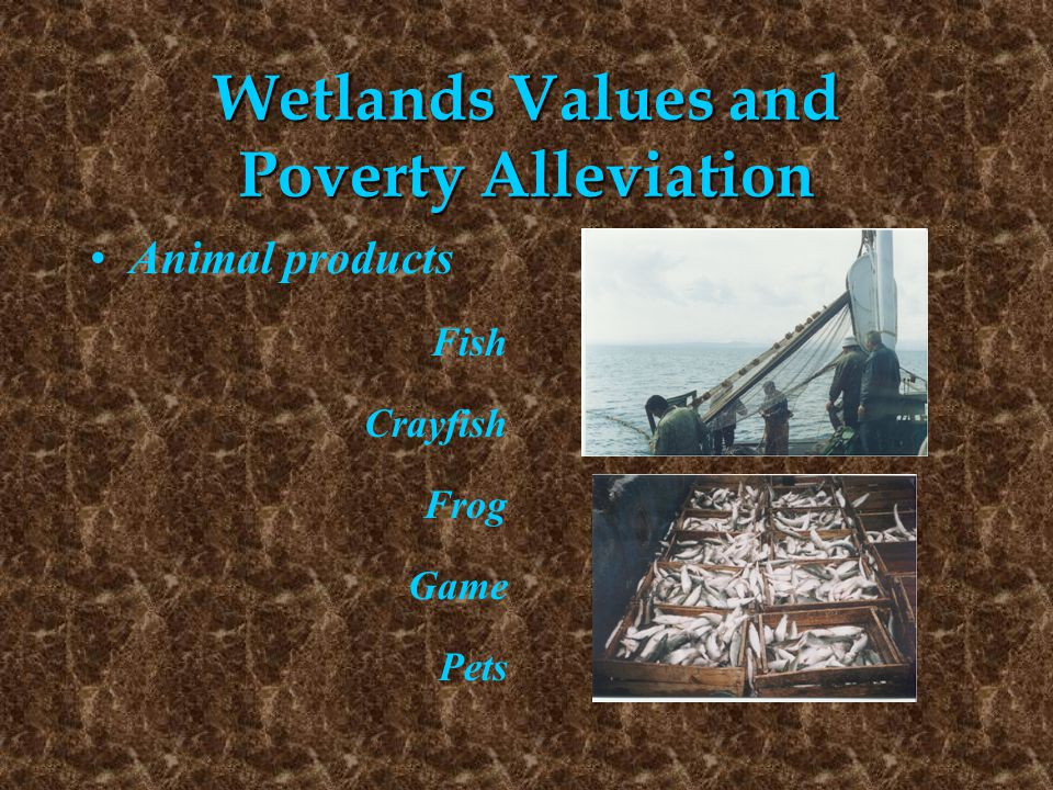 Wetlands Values and Poverty Alleviation Animal products Fish Crayfish Frog Game Pets