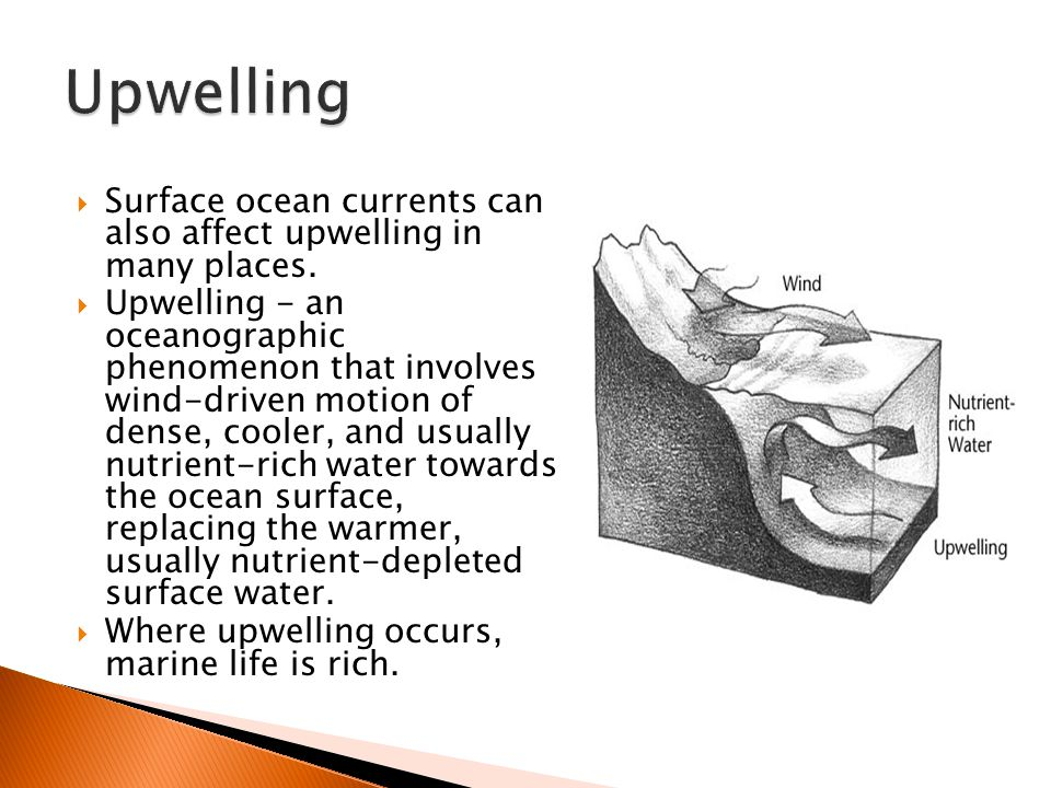  Surface ocean currents can also affect upwelling in many places.