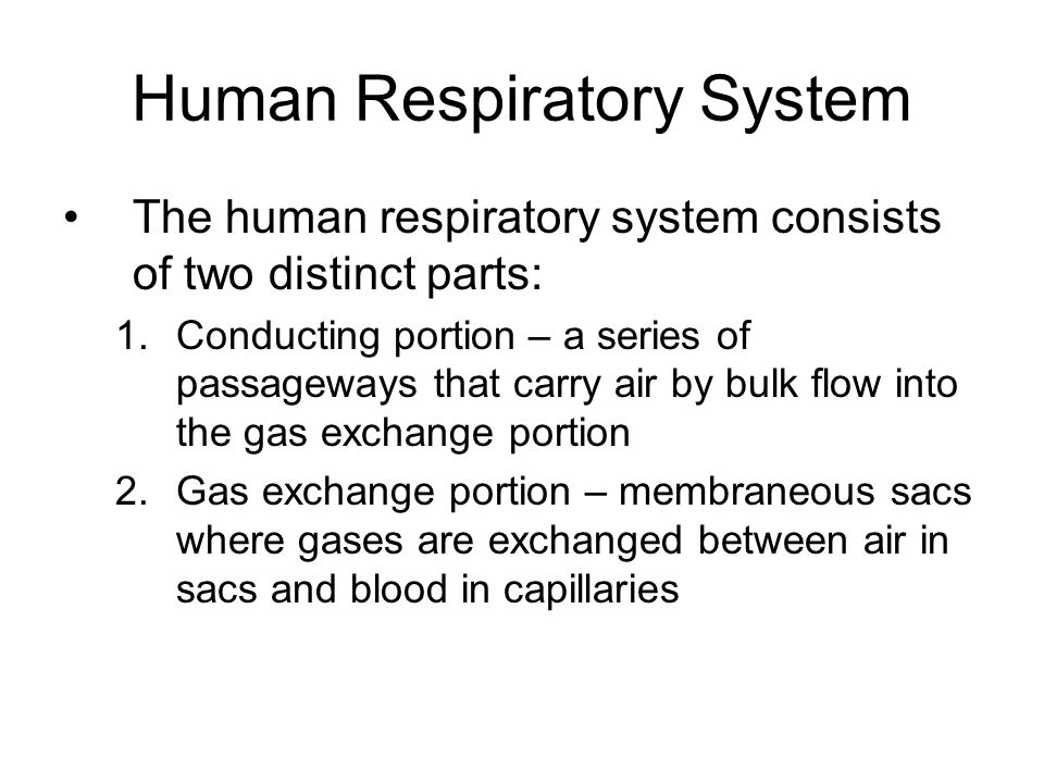 Human Respiratory System The human respiratory system consists of two distinct parts: 1.Conducting portion – a series of passageways that carry air by bulk flow into the gas exchange portion 2.Gas exchange portion – membraneous sacs where gases are exchanged between air in sacs and blood in capillaries
