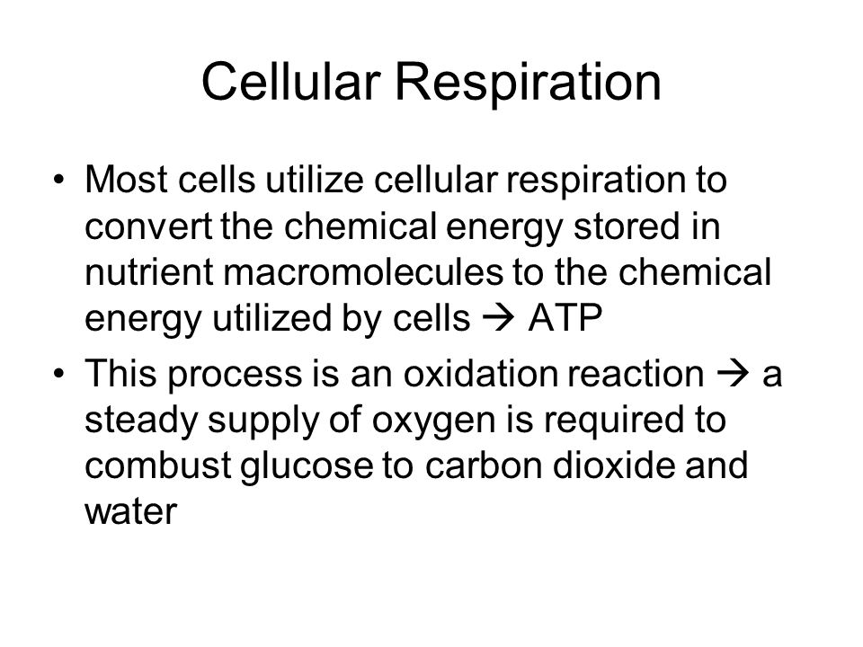 Cellular Respiration Most cells utilize cellular respiration to convert the chemical energy stored in nutrient macromolecules to the chemical energy utilized by cells  ATP This process is an oxidation reaction  a steady supply of oxygen is required to combust glucose to carbon dioxide and water