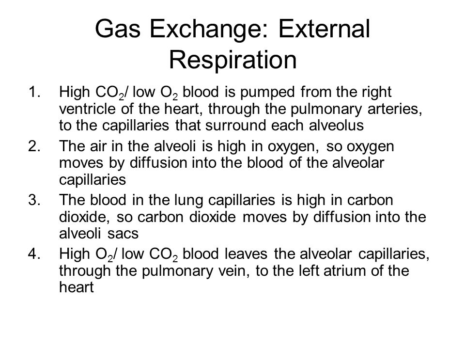 Gas Exchange: External Respiration 1.High CO 2 / low O 2 blood is pumped from the right ventricle of the heart, through the pulmonary arteries, to the capillaries that surround each alveolus 2.The air in the alveoli is high in oxygen, so oxygen moves by diffusion into the blood of the alveolar capillaries 3.The blood in the lung capillaries is high in carbon dioxide, so carbon dioxide moves by diffusion into the alveoli sacs 4.High O 2 / low CO 2 blood leaves the alveolar capillaries, through the pulmonary vein, to the left atrium of the heart