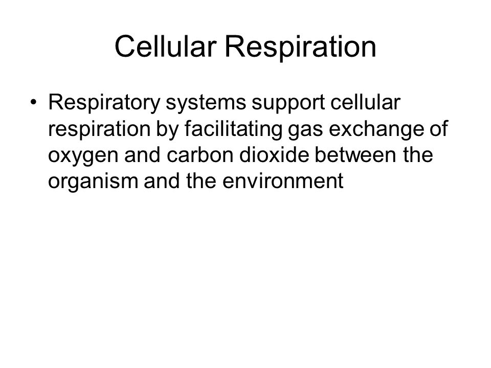 Respiratory systems support cellular respiration by facilitating gas exchange of oxygen and carbon dioxide between the organism and the environment