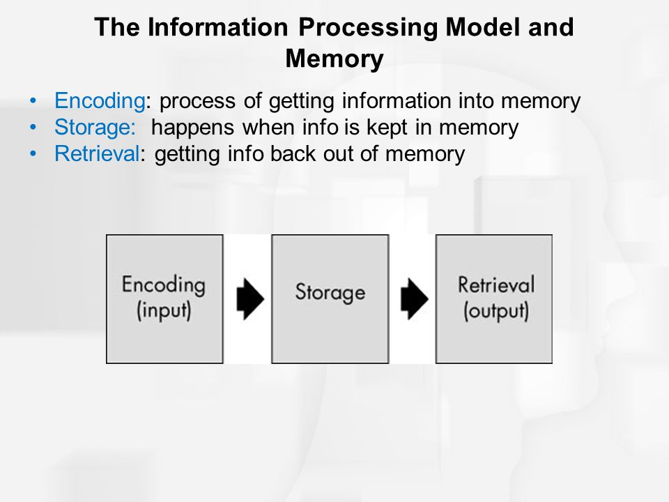 memory in the interpretation process The lobes of the brain are regions of characterized memory, language researchers believe that this area aids the brain's interpretation of various modes.